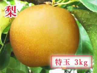 nashi-1